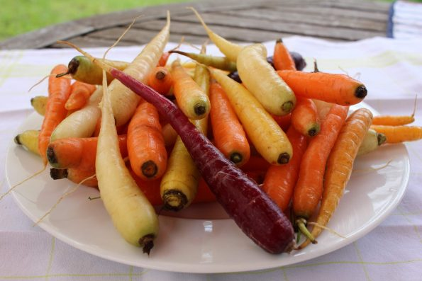 carottes nouvelles